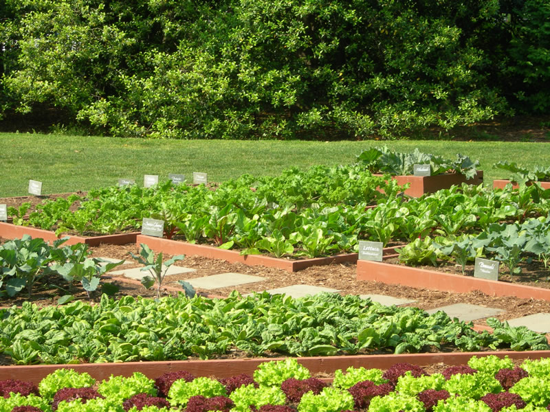 Quotes about garden vegetables 66 quotes for Garden design quotations