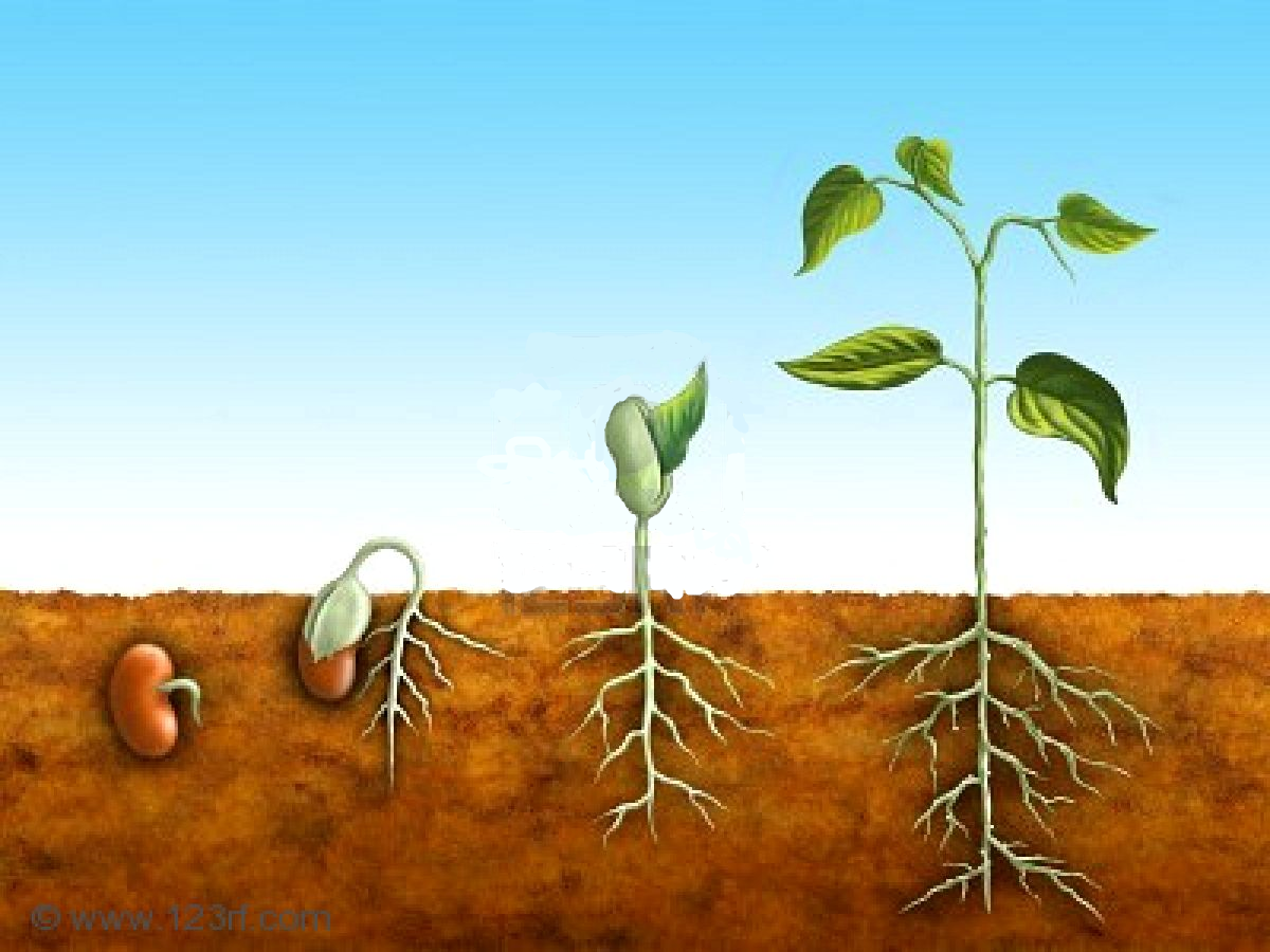Quotes About Planting Seeds For Life Quotes About Seeds Of Life 65 Quotes