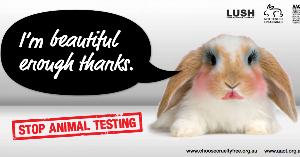 cruelty on animal testing Labels under the impulse of the public shocked by the conditions of experimentation on animals and the suffering that engenders, a collective consciousness around the world has gradually immersed and many actors of this movement have emerged in the industry to avoid use animal testing and look for new alternativessince 2004, animal testing.