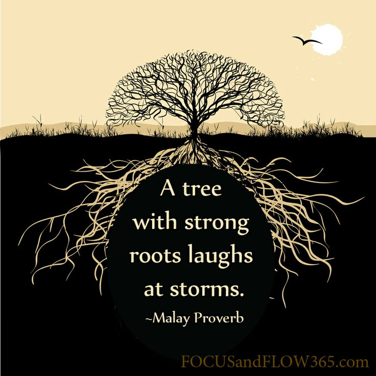 Quotes About Without Root 49 Quotes