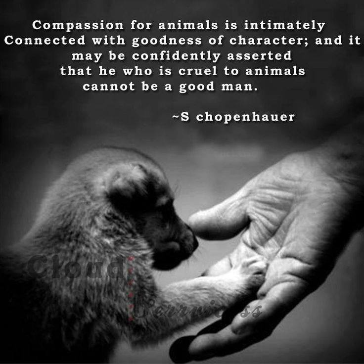 how should animal be treated What rights should animals have how are those rights different from human rights animal rights activists argue that because animals are sentient, the only reason humans are treated differently is speciesism, which is an arbitrary distinction based on the incorrect belief that humans are the only.