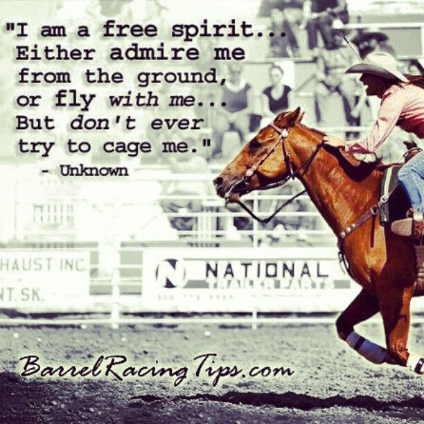 Betting horses quotes sport betting software free download