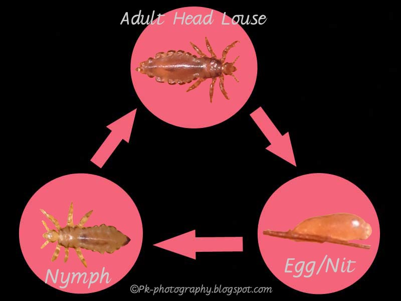 Quotes about Head lice 27 quotes