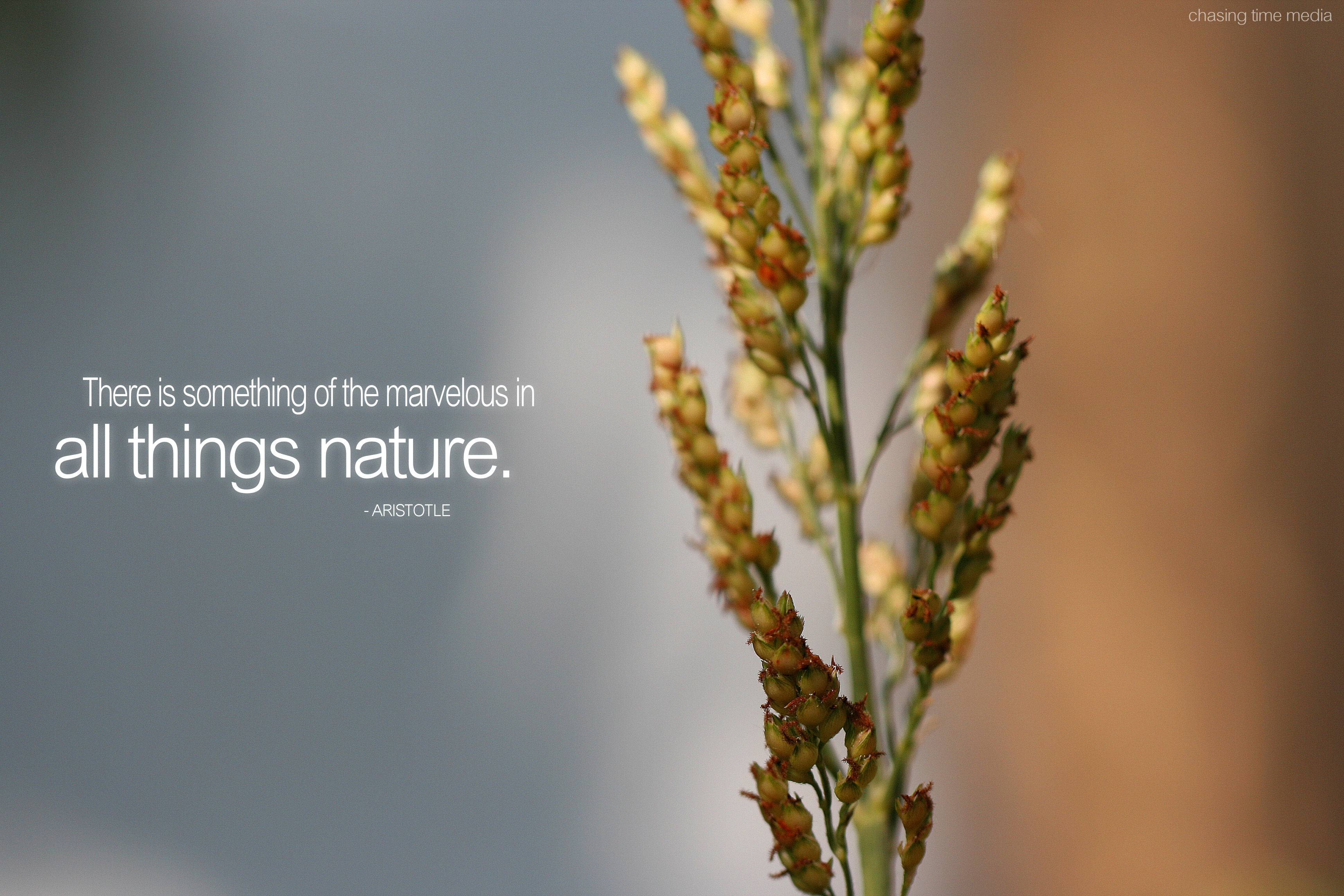 Quotes about Nature of beauty 189 quotes