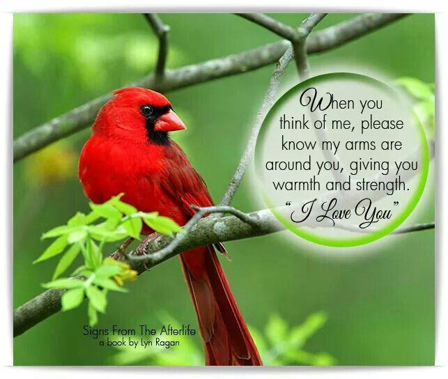 Quotes About Cardinal Bird 24 Quotes