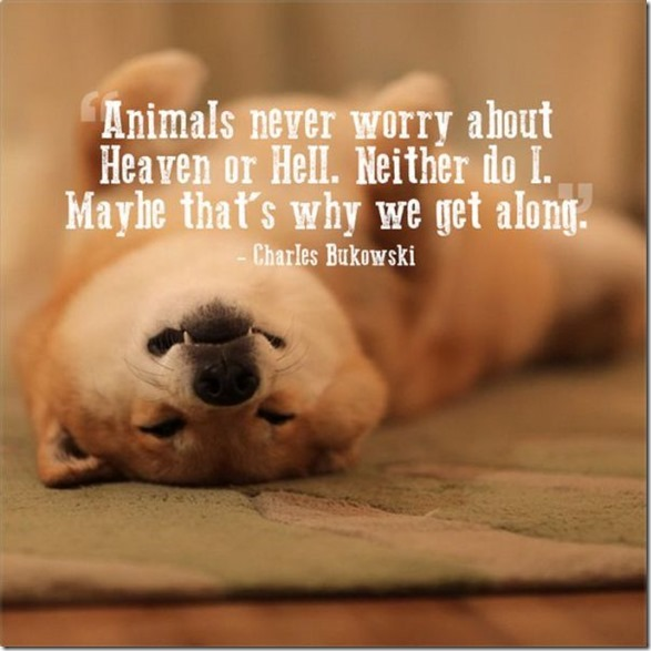 Http Www Thechobble 2017 07 Quotes For Love Of Your Pets 20 Photos Html
