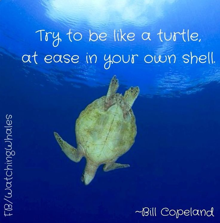 Quotes About Turtle 107 Quotes