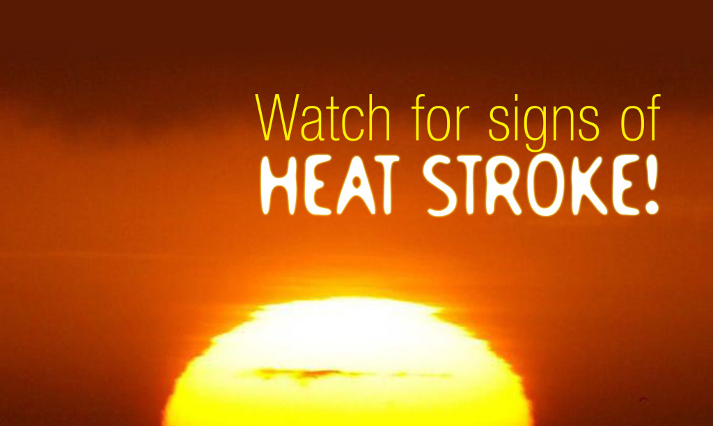 Quotes about Heat stroke (25 quotes)