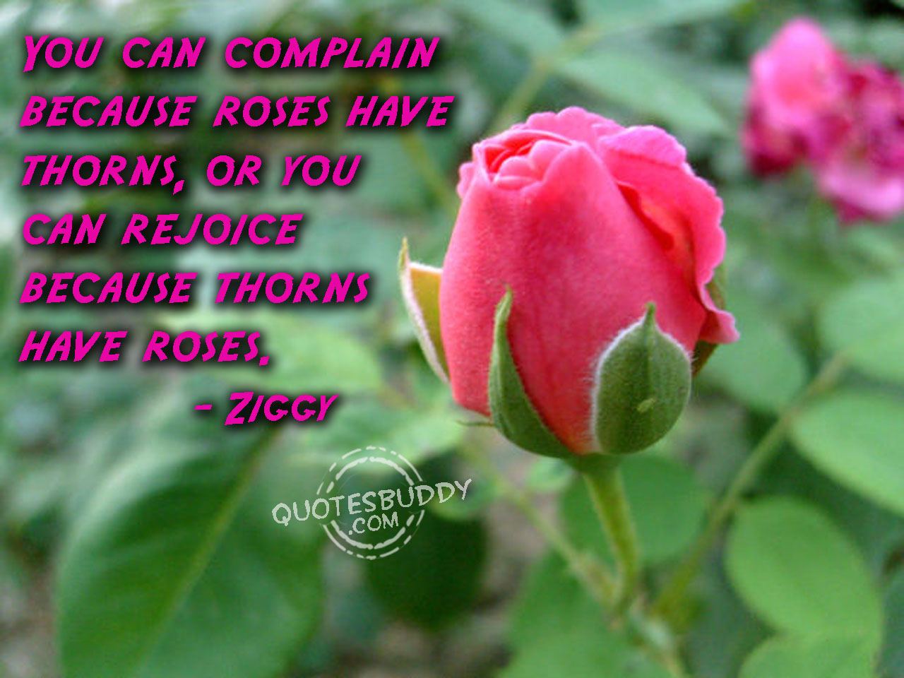 Quotes About Rose Flower 64 Quotes