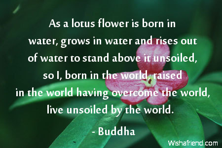 Quotes about lotus 111 quotes mightylinksfo