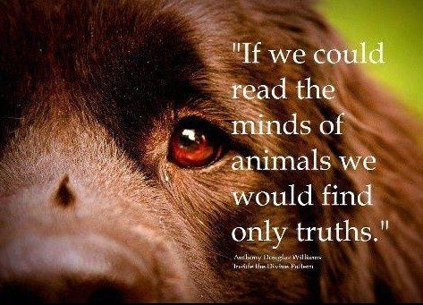 Quotes about Animal Love (87 quotes)