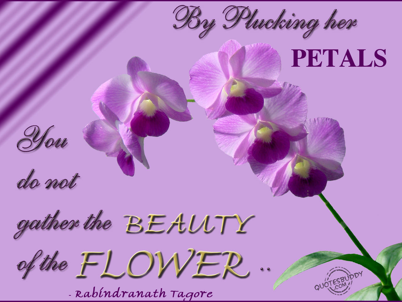 Quotes About Flower Petals 41 Quotes