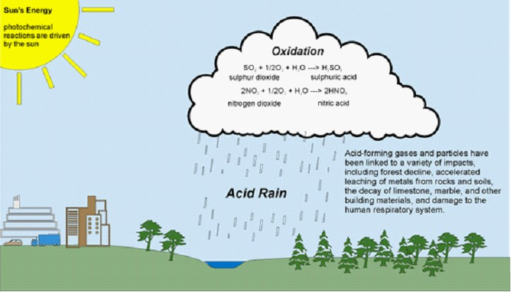 research paper on acid rain The intent of this paper is to educate individuals about acid rain, define its chemical makeup, and describe its impact on the environment rain is an important part of all life it is the source of water for almost everything.