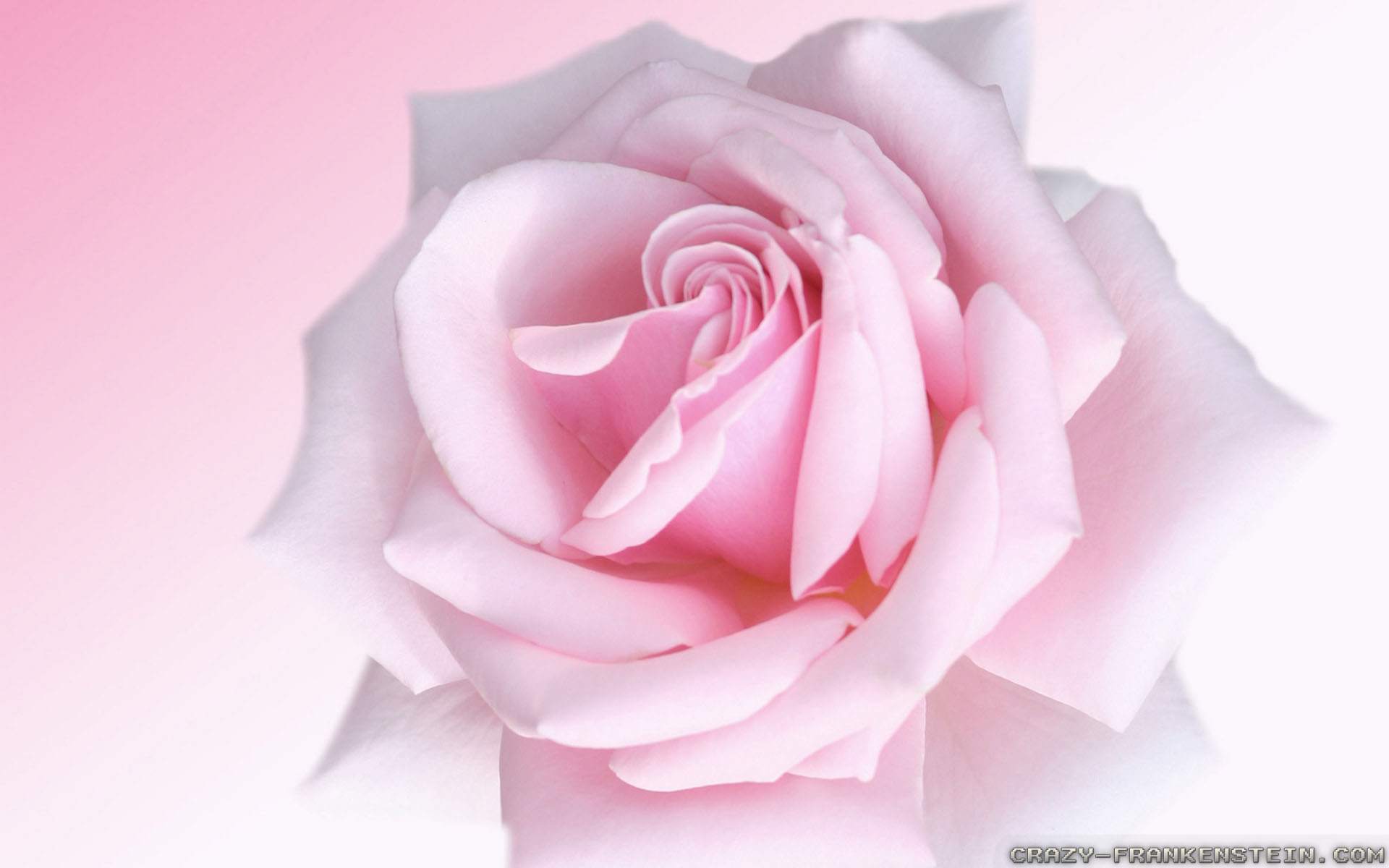 Quotes about beautiful roses 46 quotes quotes about beautiful roses izmirmasajfo