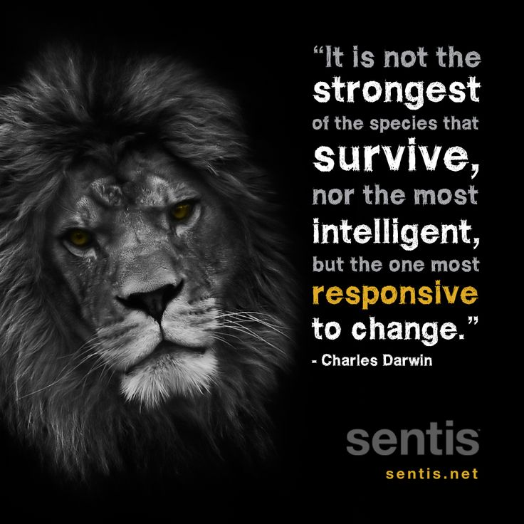 Resilience Quotes Captivating Quotes About Strength And Resilience 37 Quotes