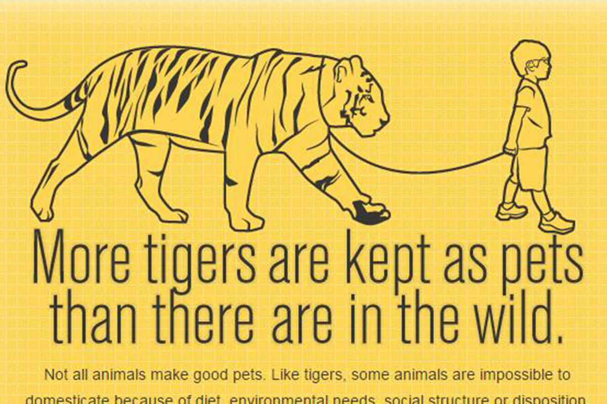 Wild Animals Kept As Pets