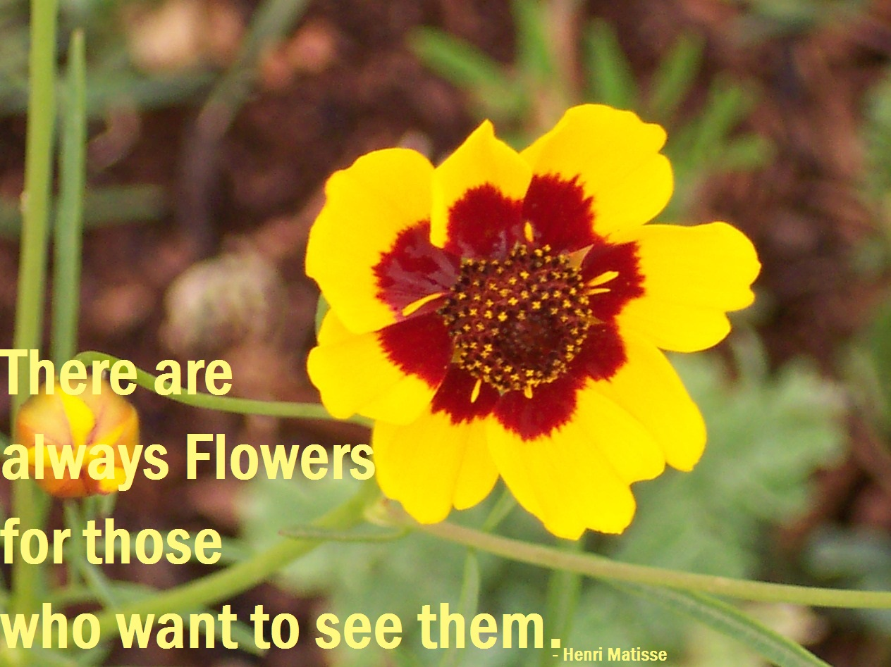 Quotes About Wanting Flowers 23 Quotes