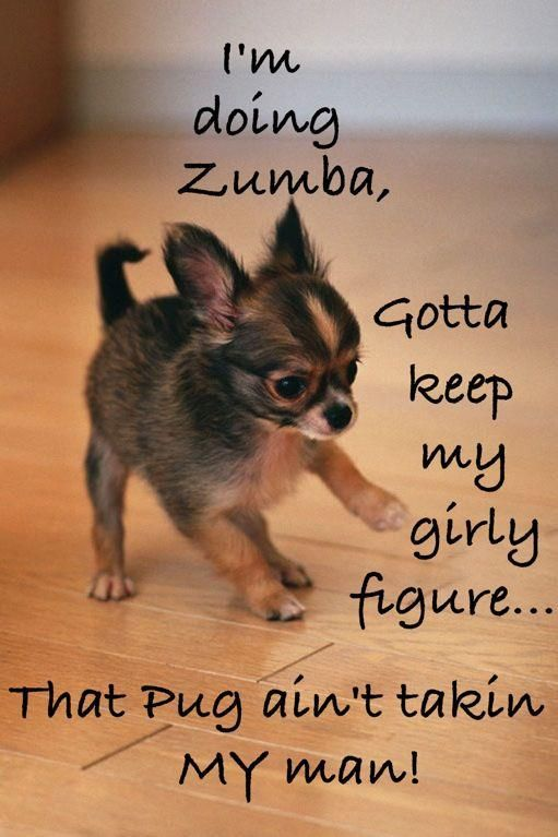 Quotes About Dogs And Exercise 22 Quotes