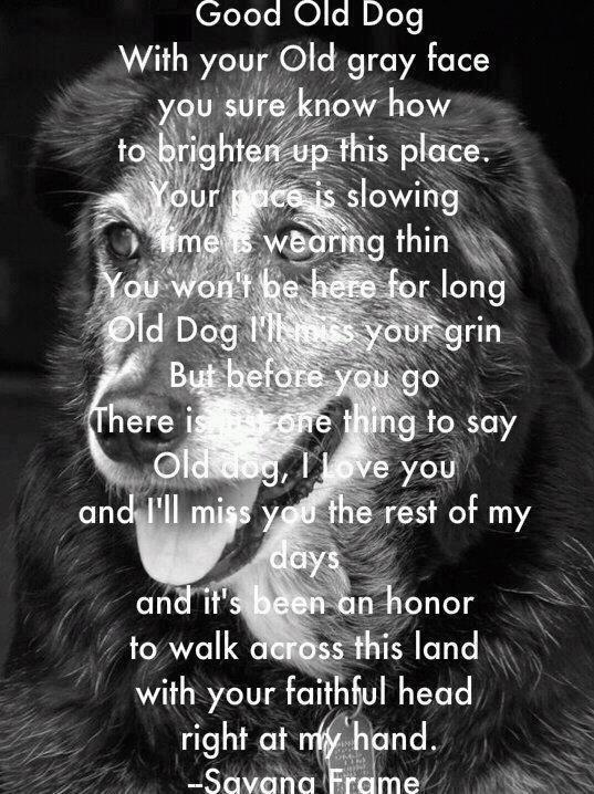 Quotes about Old Dog (78 quotes)