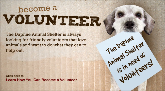 Quotes About Animal Shelter Volunteers 21 Quotes