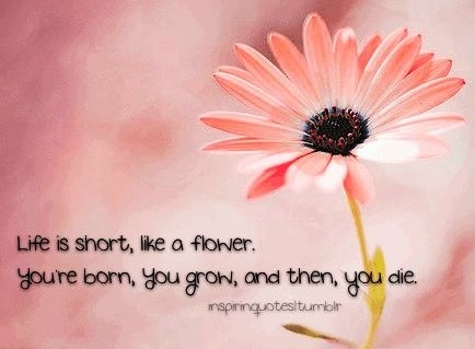 Quotes about blooming flower 72 quotes mightylinksfo