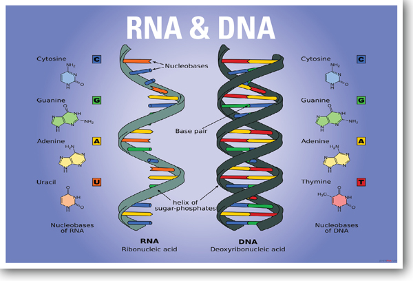 Dna Quotes And Sayings: Quotes About Rna (30 Quotes