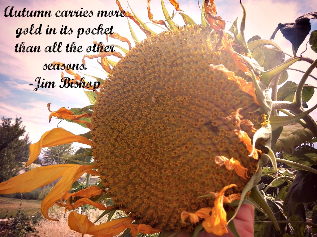 Quotes About Sunflower 50 Quotes