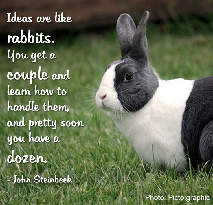 Quotes about Pet rabbits (20 quotes)