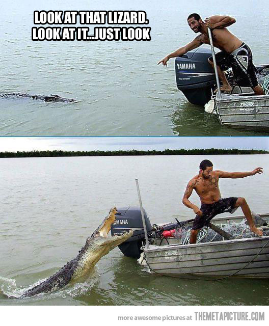 Quotes about Crocodile attack (24 quotes)