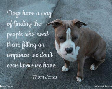 Quotes About Pet Dogs Dying 20 Quotes