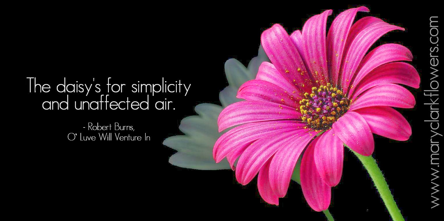 Quotes About Pink Flower 29 Quotes