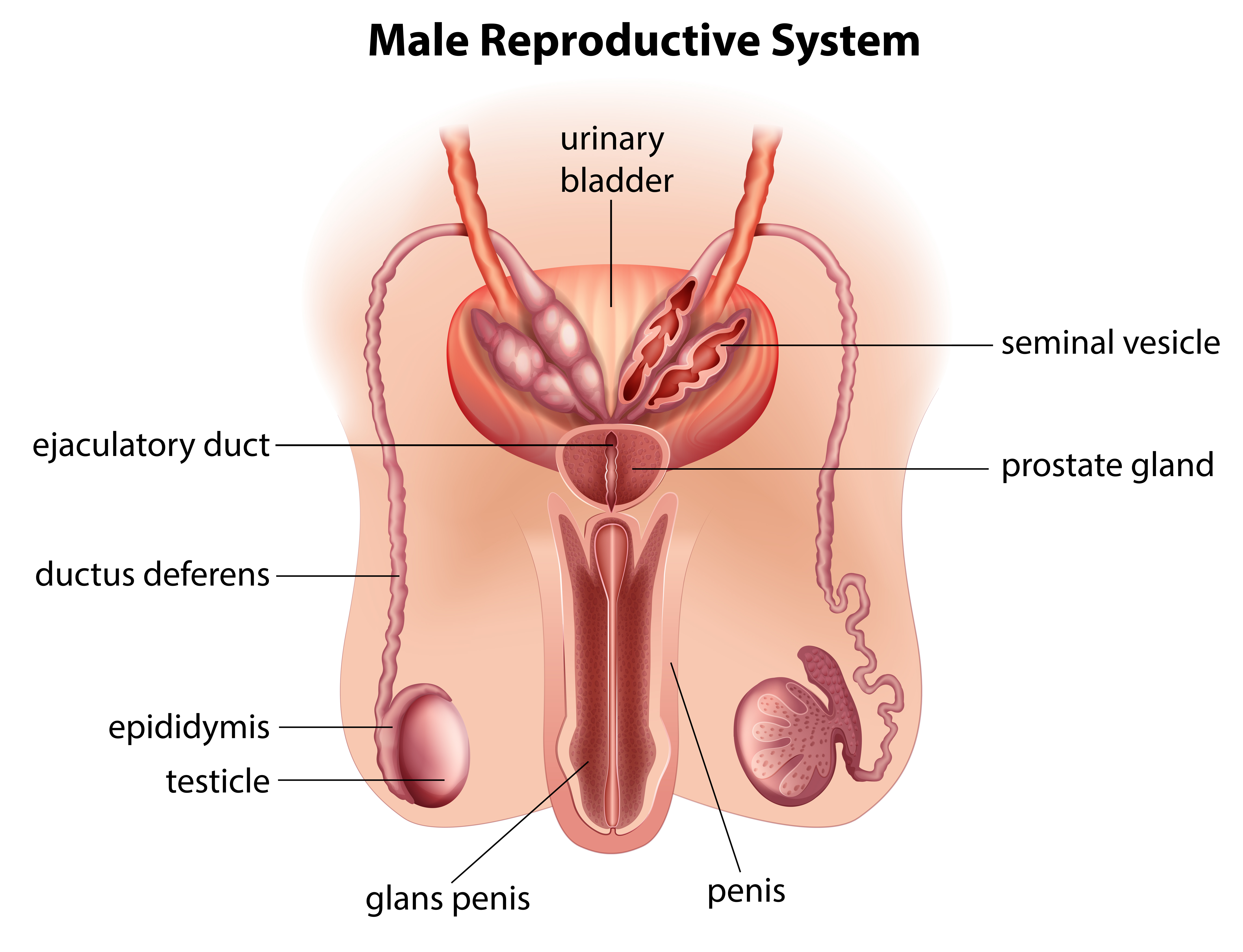 Quotes About Reproductive System  29 Quotes