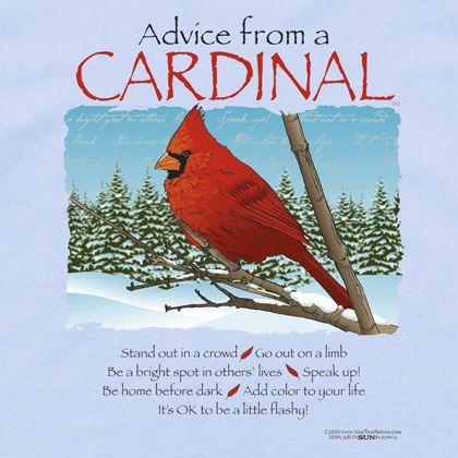 Red Cardinal Bird Symbolism Birds Of Prey