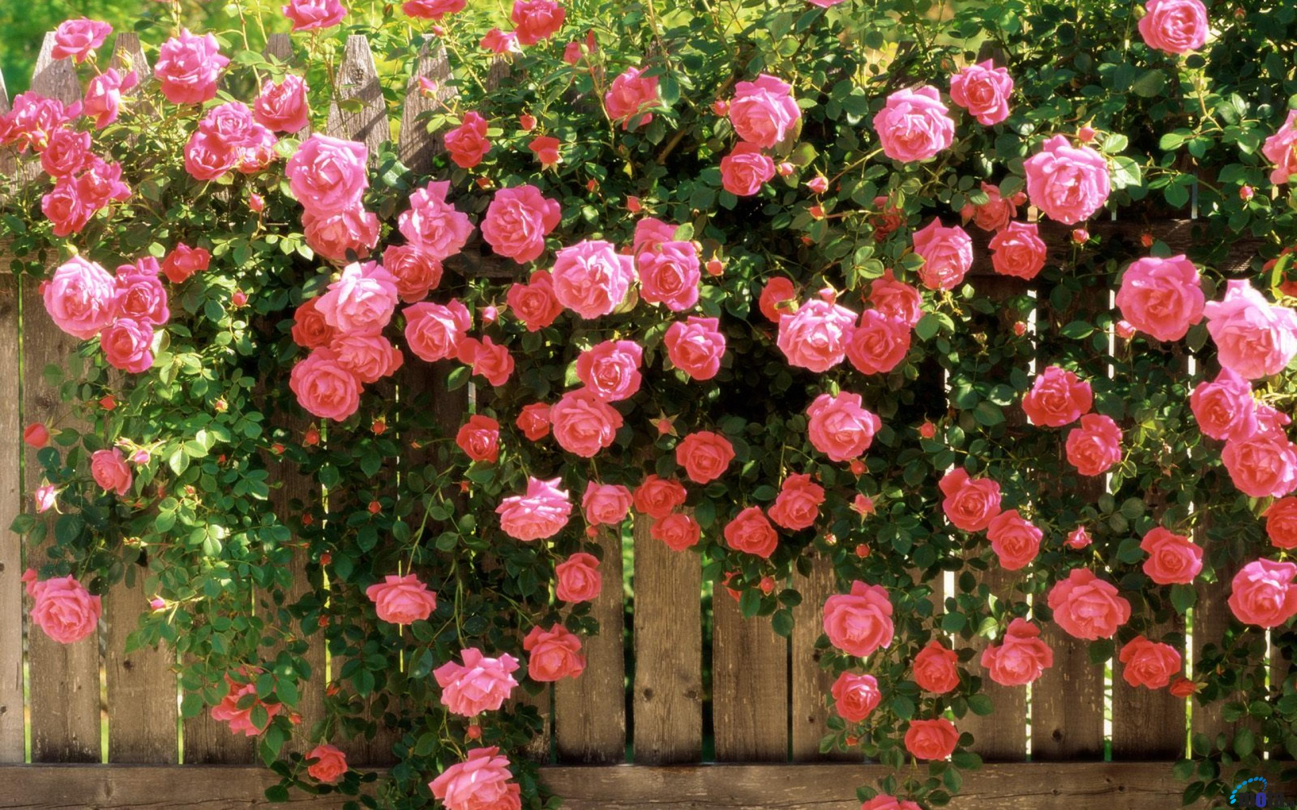 Quotes about Rose Garden (77 quotes)