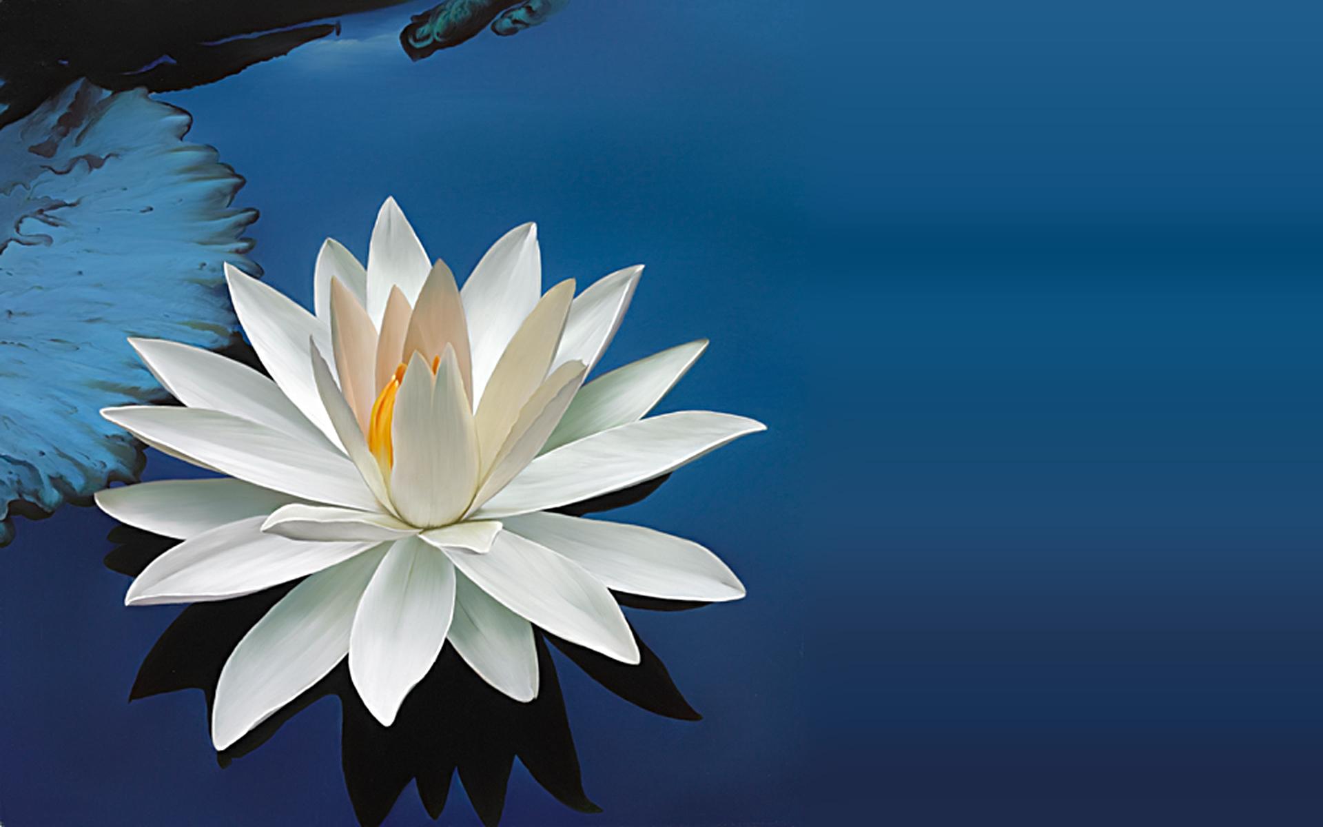 Quotes about lotus 111 quotes izmirmasajfo