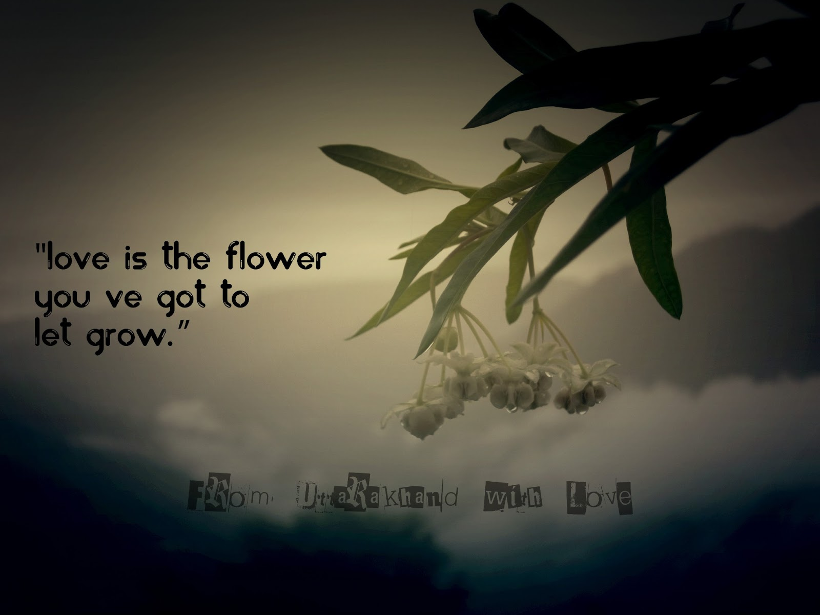 Quotes about Giving flowers (45 quotes)