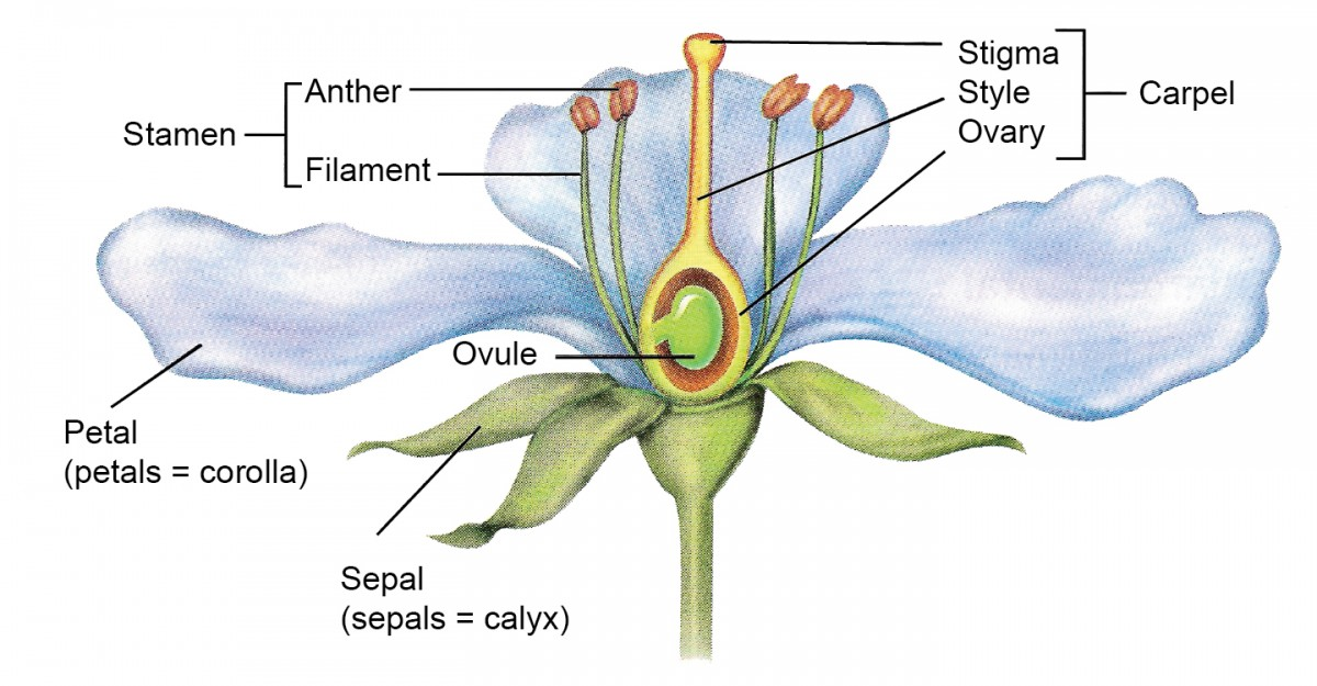 Quotes About Plant Reproduction  23 Quotes