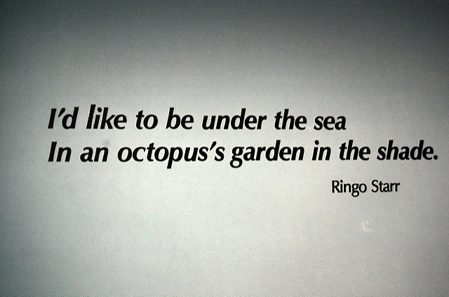 Quotes About Ringo 50 Quotes