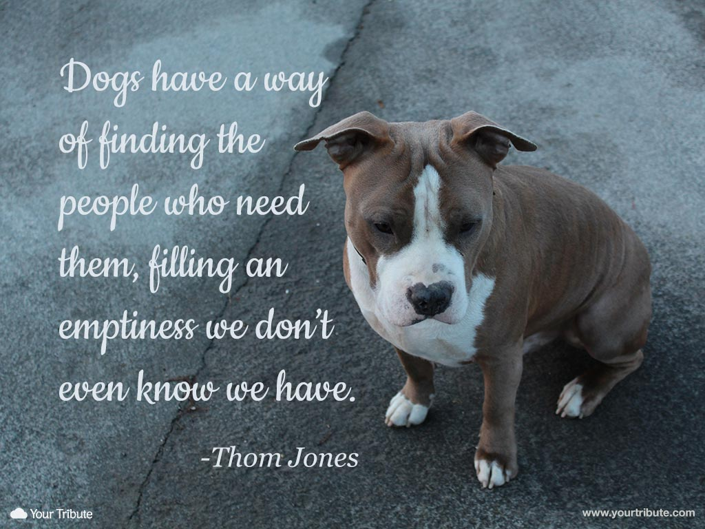 Quotes about Death dog (33 quotes)