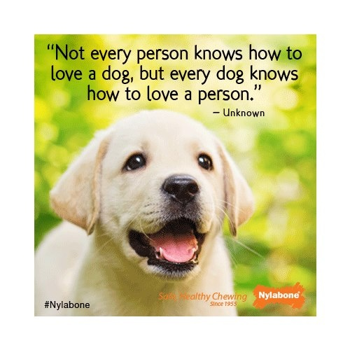Quotes About Pets: Quotes About Pet (304 Quotes