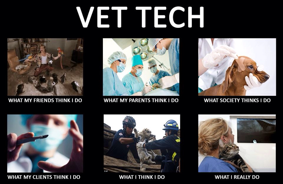 Vet Tech Quotes Stunning Quotes About Animal Vets 38 Quotes