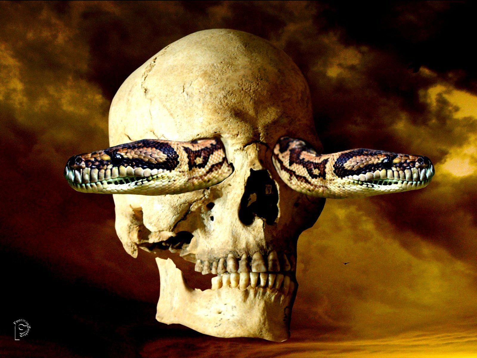 много картинки черепа со змеями всех