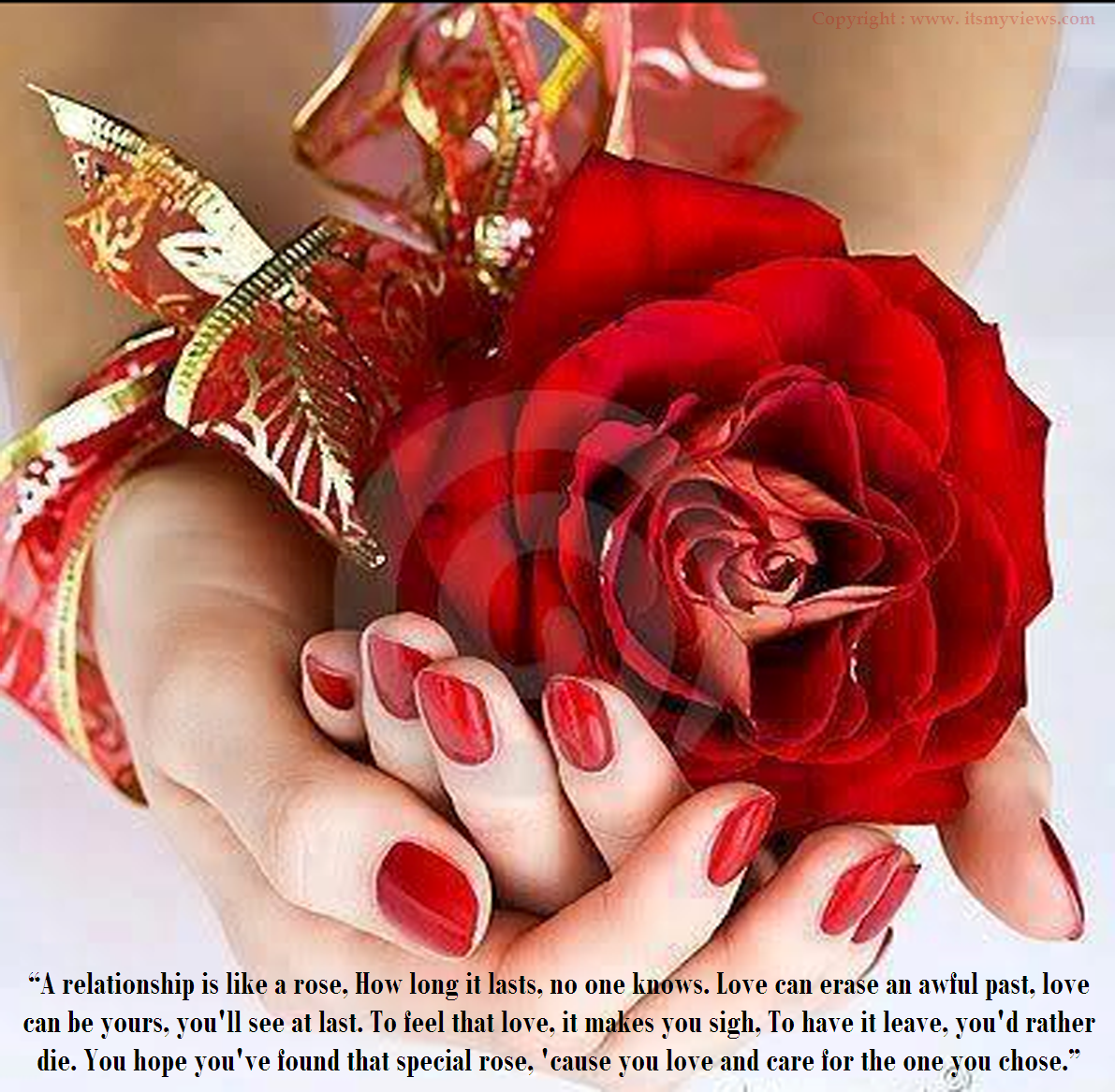 Quotes About Beautiful Rose 54 Quotes