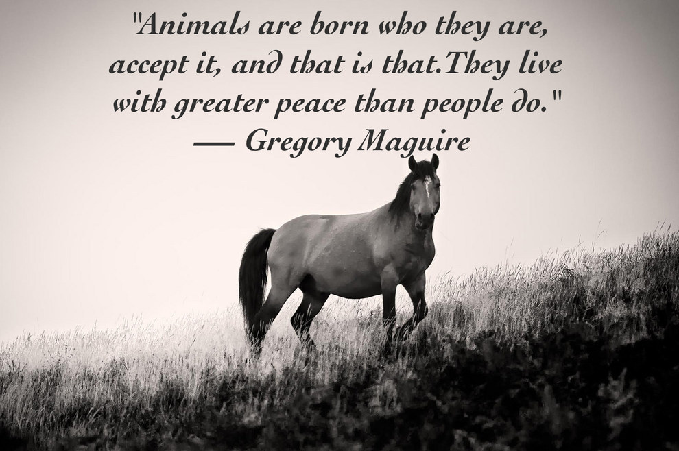 Quotes About Pets: Quotes About Animal And Human Relationships (17 Quotes