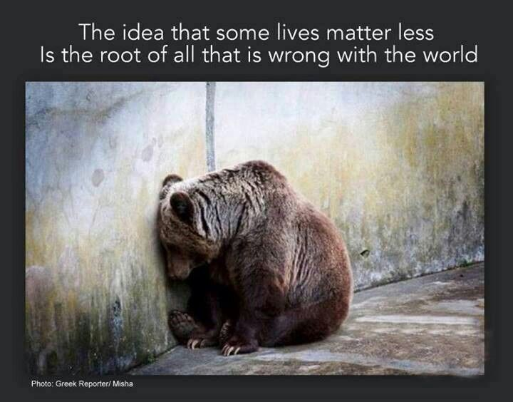 Quotes About Animal Mistreatment 60 Quotes Best Animal Abuse Quotes
