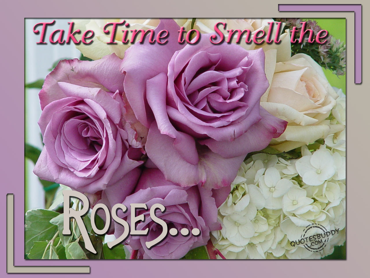 Quotes About Rose Flower 69 Quotes