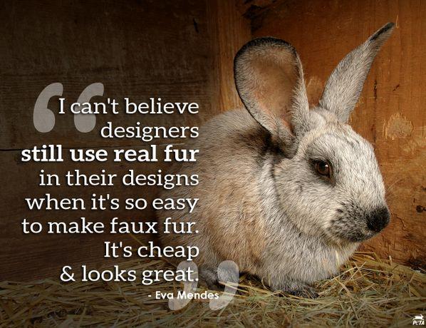 animals kindness essay