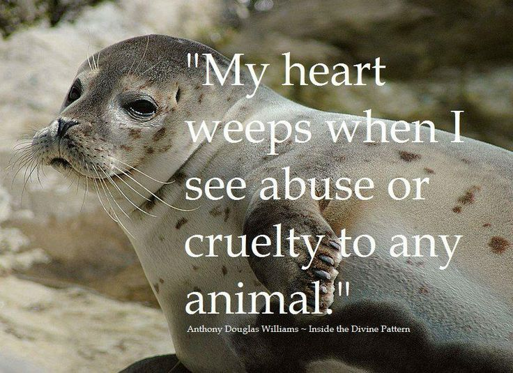 Quotes About Animal Mistreatment 25 Quotes