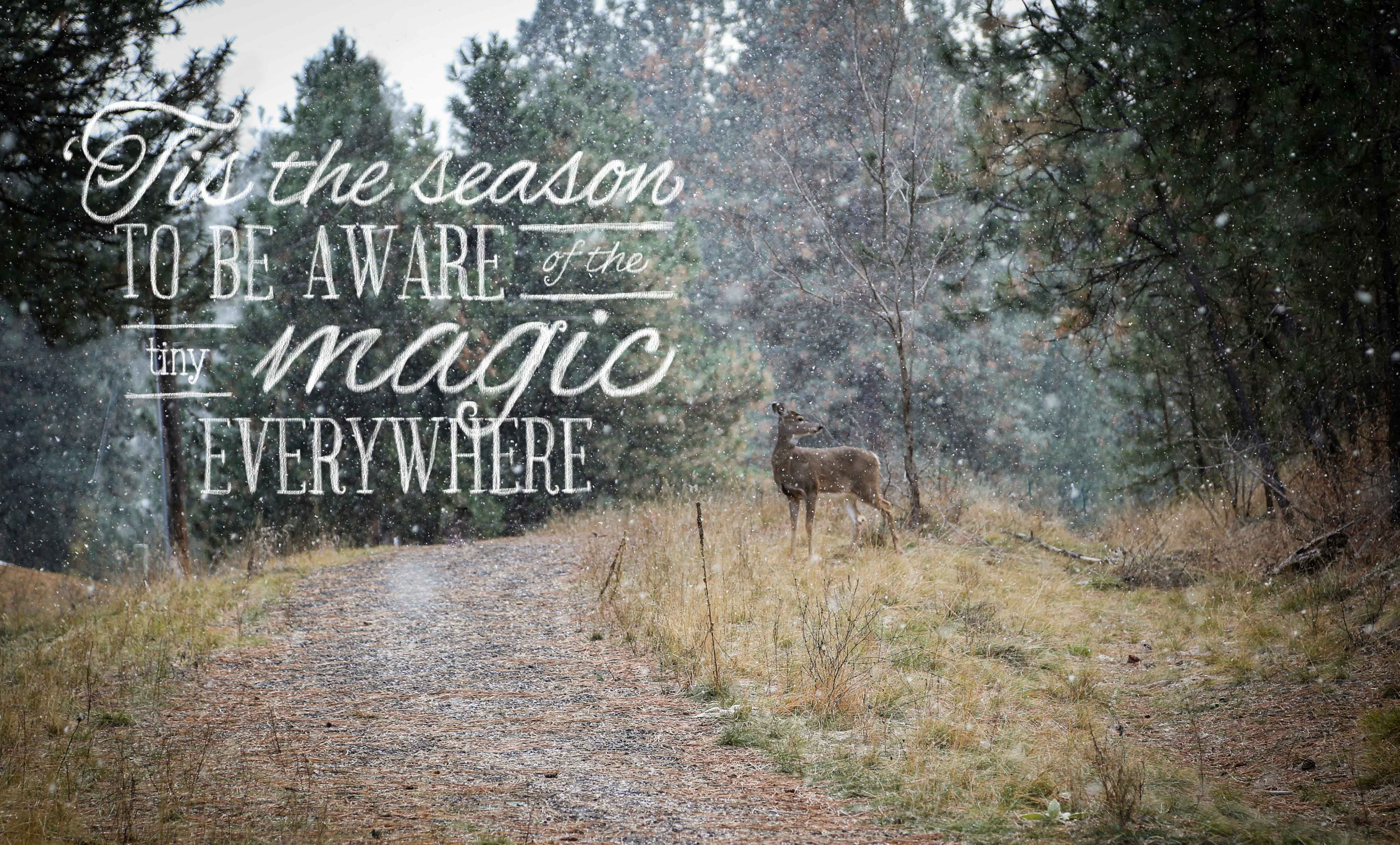 Funny Hunting Quotes Quotes About Deer 158 Quotes