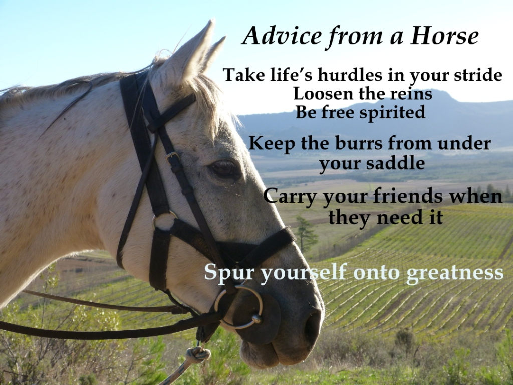 Quotes About Horse Riding 51 Quotes
